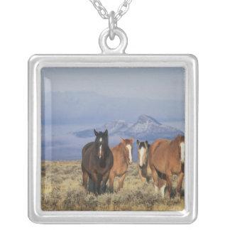 Collier Les Etats-Unis, Wyoming, près du groupe de Cody de