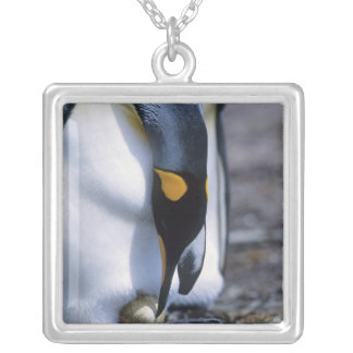 Collier Les Îles Falkland. Le pingouin de roi tend l'oeuf