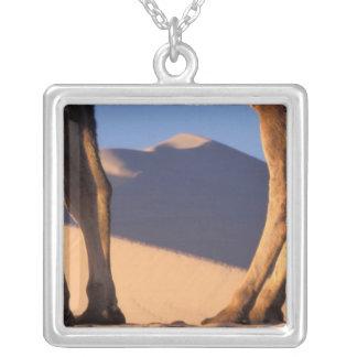 Collier Les jambes du chameau avec des dunes de sable,