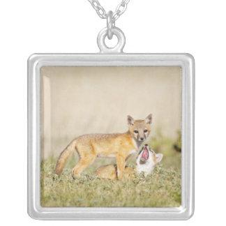 Collier Les jeunes rapides de Fox (macrotis de Vulpes) au