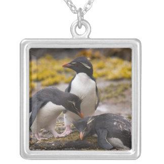 Collier Les pingouins de Rockhopper communiquent les uns