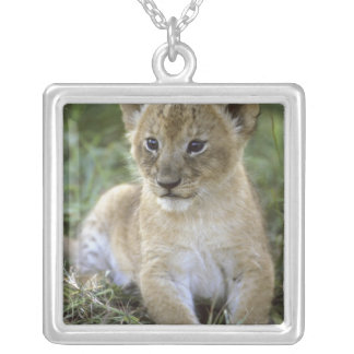Collier Lion, Panthera africains Lion), la Tanzanie,