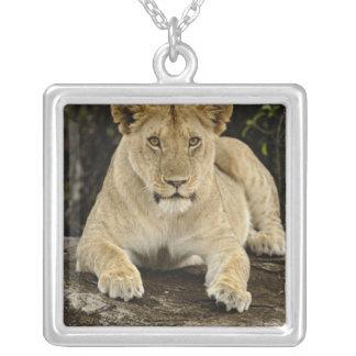Collier Lion, Panthera Lion, parc national de Serengeti,