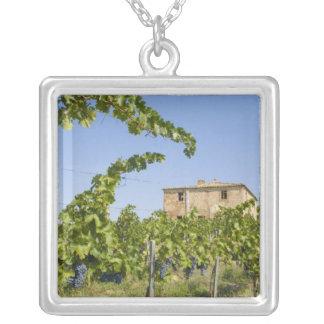 Collier L'Italie, Toscane, Montepulciano. Raisins de cuve