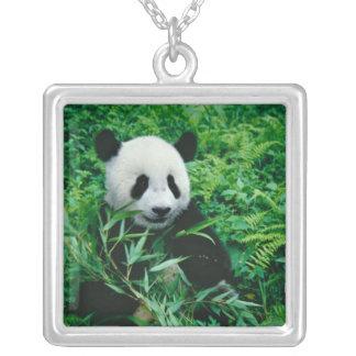 Collier L'petit animal de panda géant mange le bambou dans