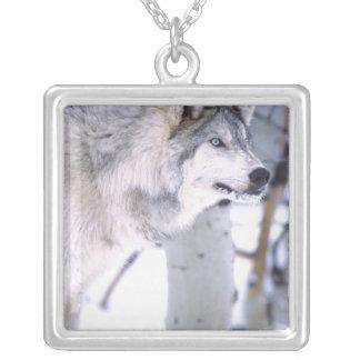 Collier Lupus de loup, de Canis de bois de construction,