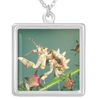 Collier Mante tanzanienne de fleur, Pseudocreboter