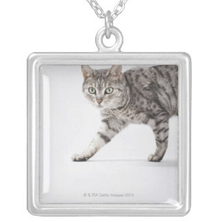 Collier Marche de chat