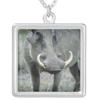 Collier Masai Mara d'africanus de Phacochoerus de Warthog)