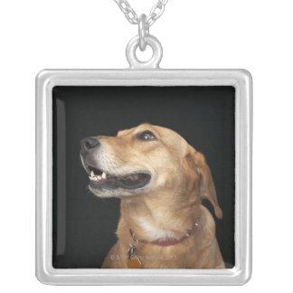 Collier Mélange d'or de laboratoire de beagle regardant au