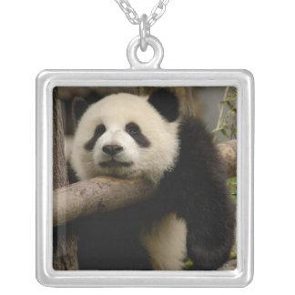 Collier Melanoleuca d'Ailuropoda de bébé de panda géant)