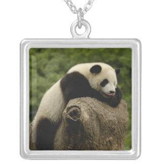 Collier Melanoleuca d'Ailuropoda de bébé de panda géant) 2