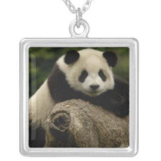 Collier Melanoleuca d'Ailuropoda de bébé de panda géant) 7