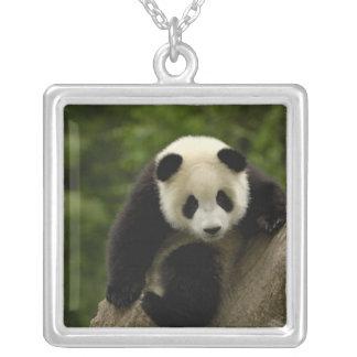 Collier Melanoleuca d'Ailuropoda de bébé de panda géant) 9