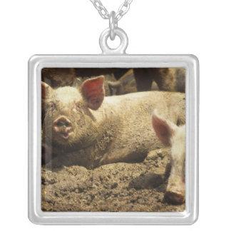 Collier MOIS : Chambre Genevieve, ferme de porc