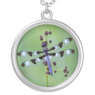 Collier Mouche de dragon étée perché sur l'herbe, Canada