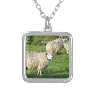 Collier Moutons irlandais