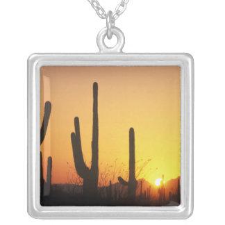 Collier N.A., Etats-Unis, AZ, Saguaro NP, coucher du