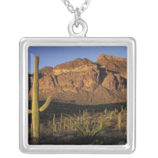 Collier Na, Etats-Unis, Arizona. Ressortissant 2 de cactus
