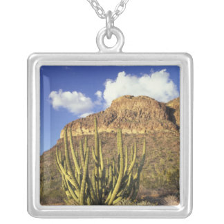Collier Na, Etats-Unis, Arizona. Ressortissant 3 de cactus
