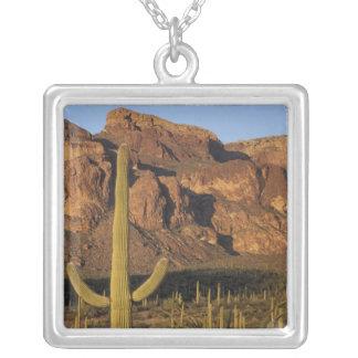 Collier Na, Etats-Unis, Arizona. Ressortissant de cactus