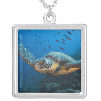 Collier Noircissez la tortue (verte) (agassizi de