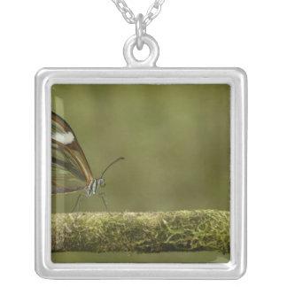 Collier nuage Clair-à ailes de PS de Hyalurga de papillon