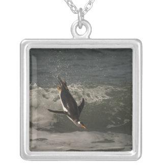 Collier Otarie de pingouin de Gentoo (Pygoscelis