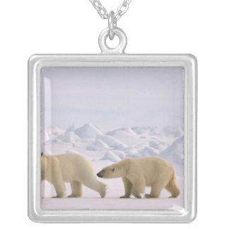 Collier ours blanc, maritimus d'Ursus, paire en glace