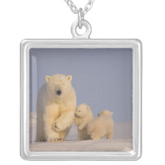 Collier ours blanc, maritimus d'Ursus, truie avec 3