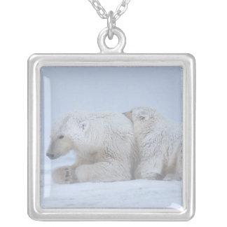 Collier ours blanc, maritimus d'Ursus, truie avec l'petit