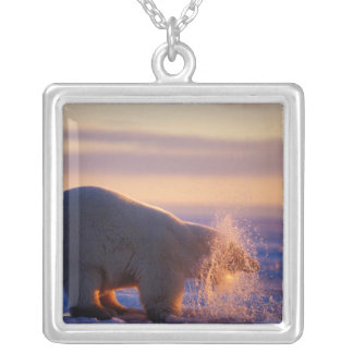 Collier Ours blanc tirant sa tête hors d'un trou dans