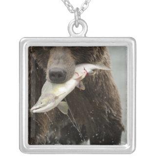 Collier Ours de Brown, ou ours gris côtier, Ursus
