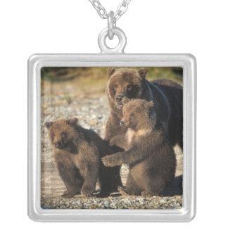 Collier Ours de Brown, ours gris, truie avec des petits