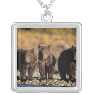 Collier Ours gris, ours brun, petits animaux,