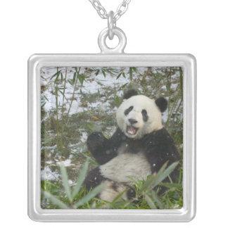 Collier Panda mangeant le bambou sur la neige, Wolong,