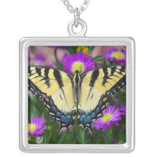 Collier Papillon de machaon sur la marguerite
