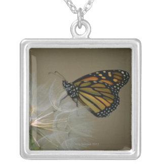 Collier Papillon sur le pissenlit