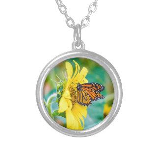 Collier Papillon sur un tournesol