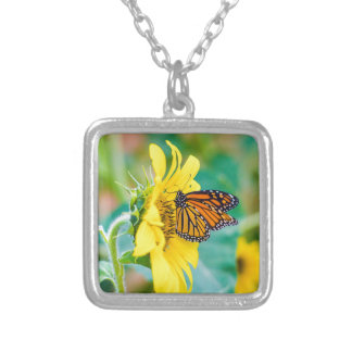 Collier Papillon sur un tournesol