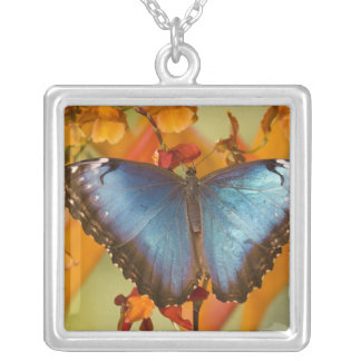 Collier Papillon tropical 10 de Sammamish Washington