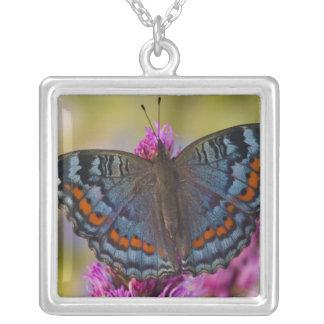 Collier Papillon tropical 3 de Sammamish Washington