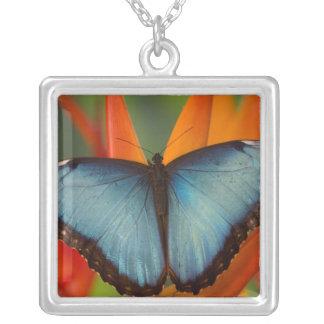 Collier Papillon tropical 5 de Sammamish Washington