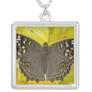 Collier Papillon tropical de Sammamish Washington