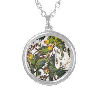 Collier Perroquet de la Caroline - John James Audubon