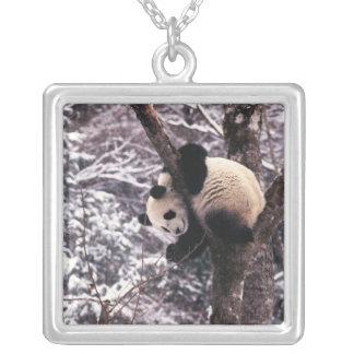 Collier Petit animal de panda jouant sur l'arbre couvert
