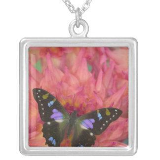 Collier Photographie de Sammamish Washington de papillon