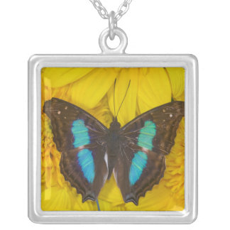 Collier Photographie de Sammamish Washington de papillon