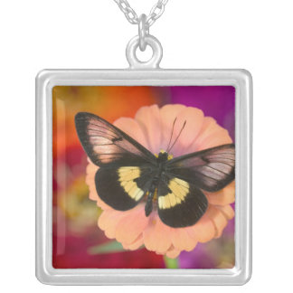Collier Photographie de Sammamish Washington du papillon