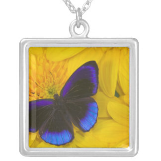 Collier Photographie de Sammamish Washington du papillon
